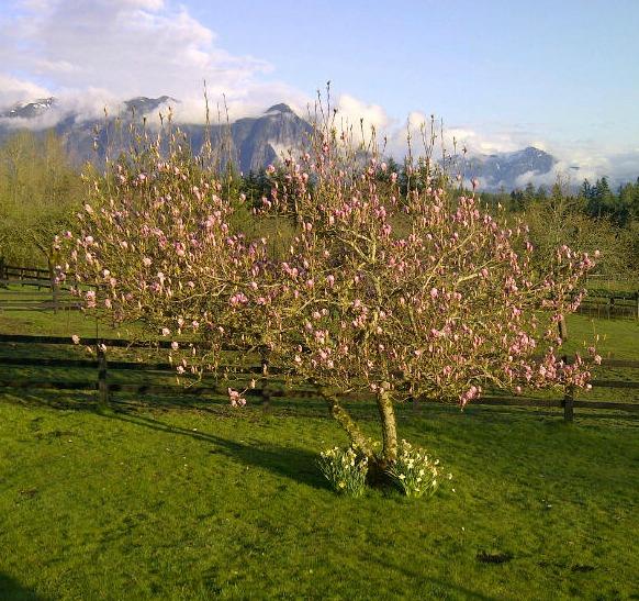 Beautiful spring meeting